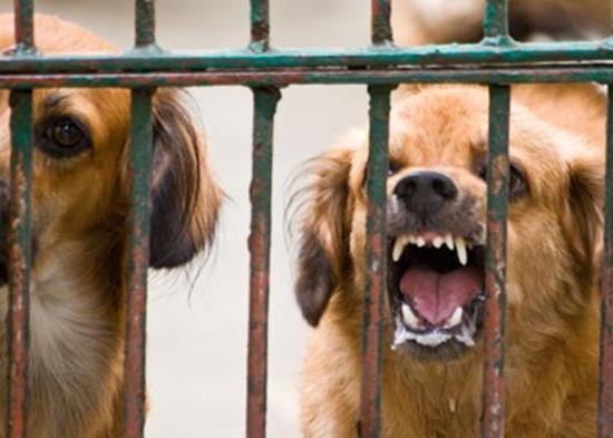 Nusabali.com - sempat-tidak-teridentifikasi-satu-korban-tergigit-anjing-rabies-sudah-dapat-var