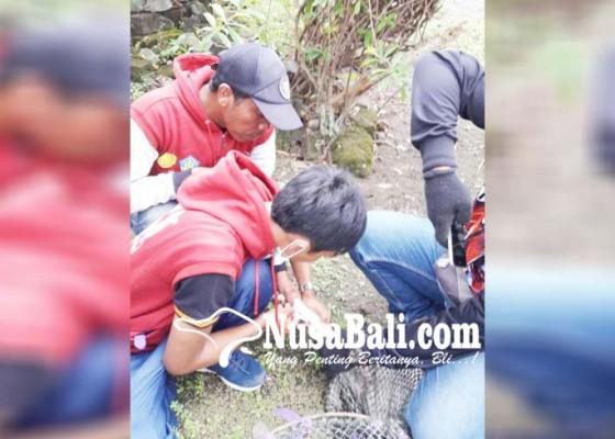 Nusabali.com - vaksinasi-massal-target-100-ribu-hpr