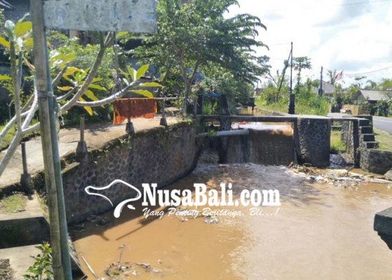 Nusabali.com - sungai-keruh-peternak-kesulitan-air