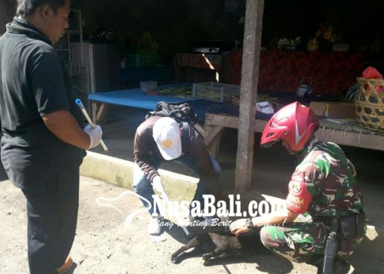 Nusabali.com - eliminasi-anjing-liar-di-kawasan-besakih