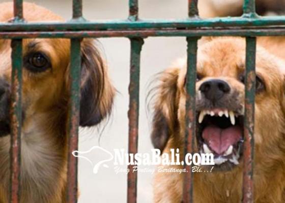 Nusabali.com - 8-warga-bangli-tergigit-anjing-positif-rabies