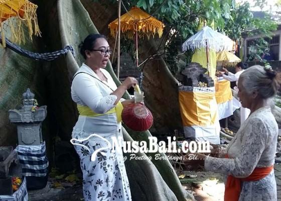 Nusabali.com - diyakini-ular-duwe-menghilang-secara-gaib-di-tengah-keramaian