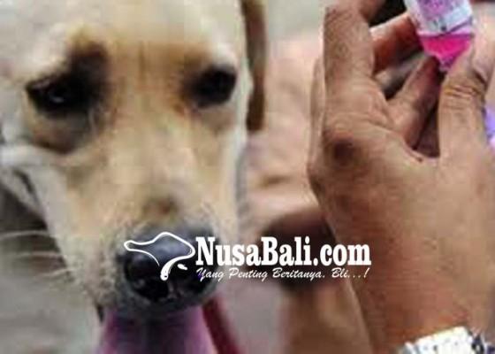 Nusabali.com - buleleng-siap-vaksinasi-95000-anjing