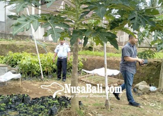 Nusabali.com - warga-binaan-dilatih-pertukangan-dan-pembibitan-jati