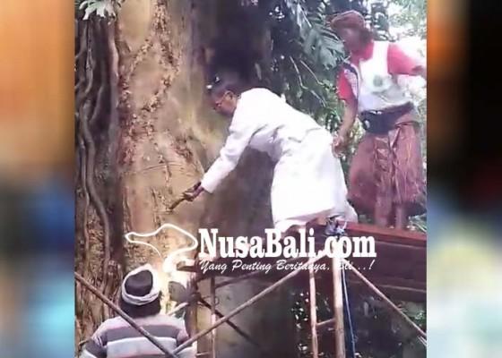 Nusabali.com - ida-pedanda-lebar-tertimpa-pohon-pule