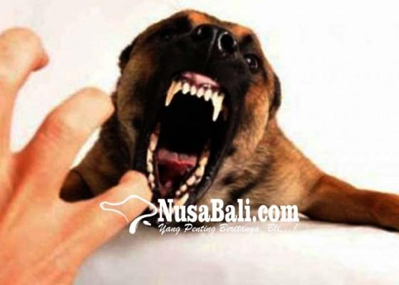 Nusabali.com - anjing-rabies-gigit-6-warga