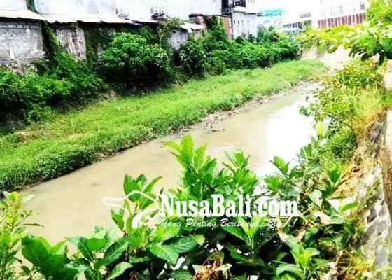 Nusabali.com - penataan-tukad-mati-ratusan-pohon-akan-ditebang