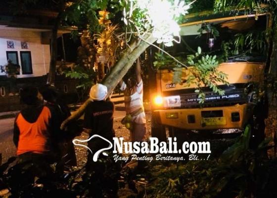 Nusabali.com - hindari-makhluk-gaib-tabrak-pohon-perindang