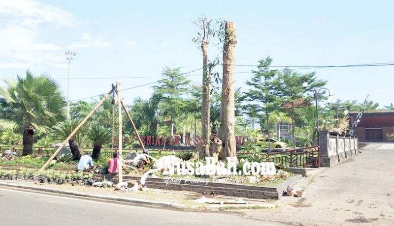 www.nusabali.com-dewan-soroti-pohon-pule-di-gkbk-jembrana