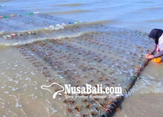 Nusabali.com - harga-rumput-laut-naik