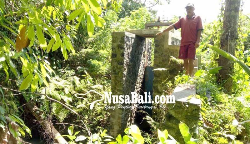 www.nusabali.com-embung-bantuan-pusat-jebol-harapan-petani-kandas