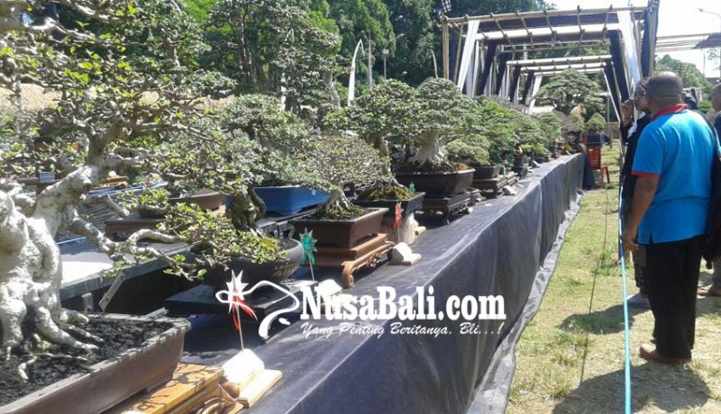 www.nusabali.com-320-bonsai-ikut-kontes-hut-kota-gianyar