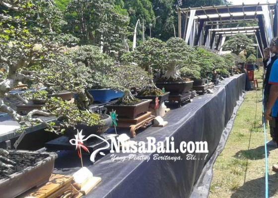 Nusabali.com - 320-bonsai-ikut-kontes-hut-kota-gianyar