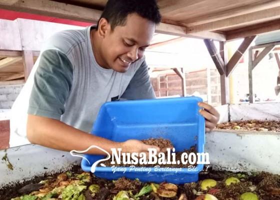 Nusabali.com - raup-rupiah-dari-budidaya-belatung-limbah-organik