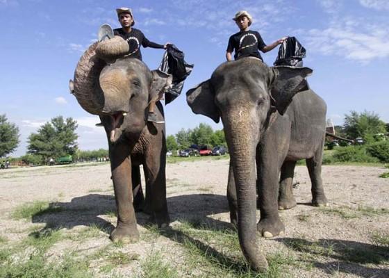 Nusabali.com - dua-gajah-dilibatkan-bersihkan-pantai-mertasari