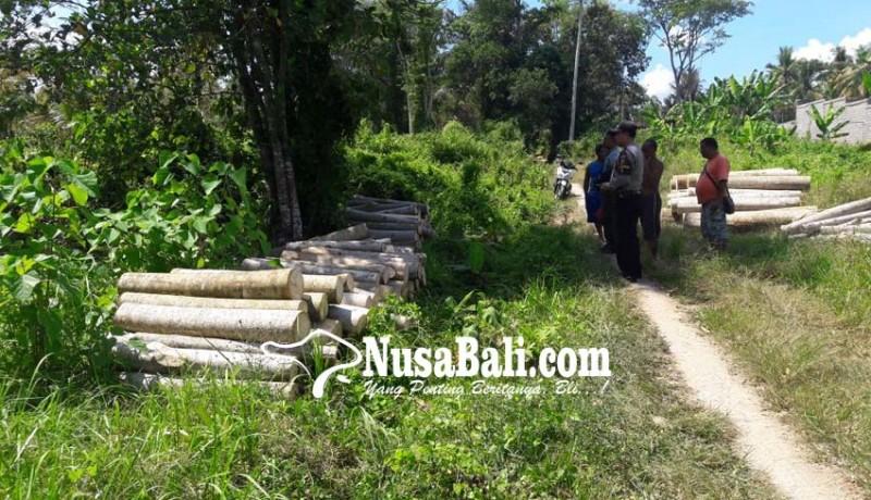 www.nusabali.com-pohon-albesia-ditebang-ilegal