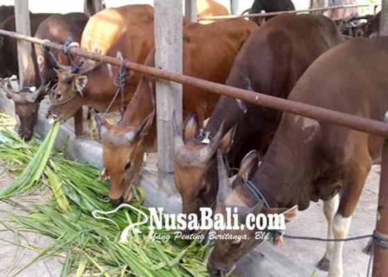 Nusabali.com - permintaan-tinggi-bali-batasi-pengeluaran-sapi