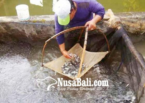 Nusabali.com - rp-30-miliar-untuk-bangun-bbi-di-baha