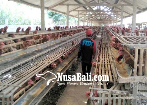 Nusabali.com - banyak-usaha-peternakan-belum-berizin