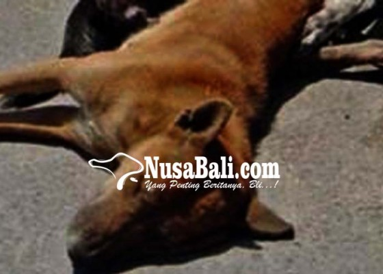 Nusabali.com - peracun-anjing-divonis-hukuman-percobaan