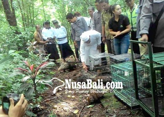 Nusabali.com - dilarang-memburu-satwa-dengan-radius-5-kilometer