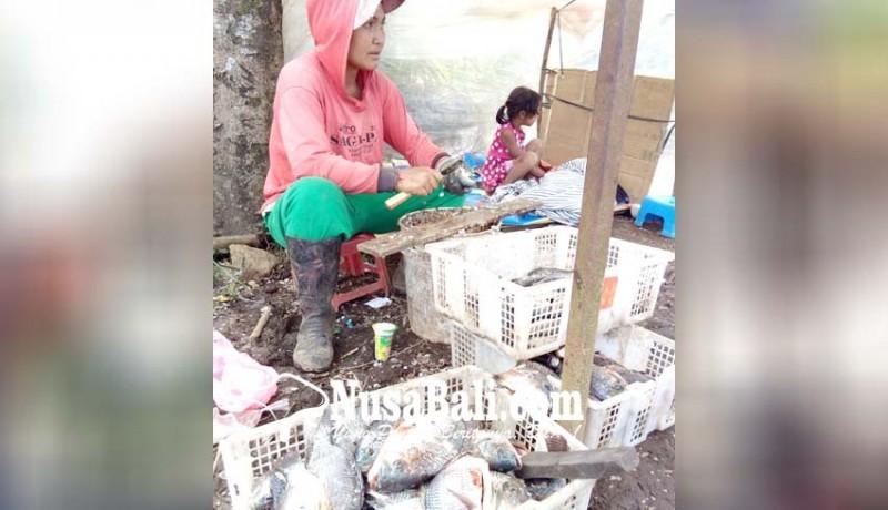 www.nusabali.com-tangkapan-ikan-melimpah