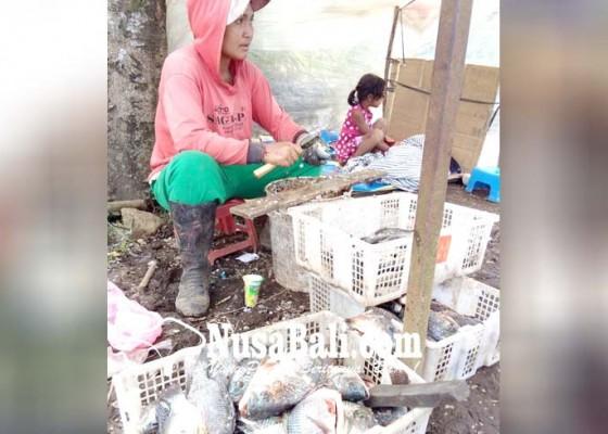 Nusabali.com - tangkapan-ikan-melimpah