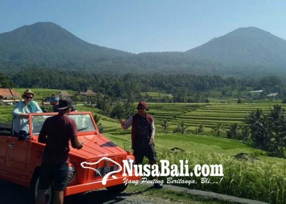 Nusabali.com - kunjungan-ke-jatiluwih-didominasi-wisman
