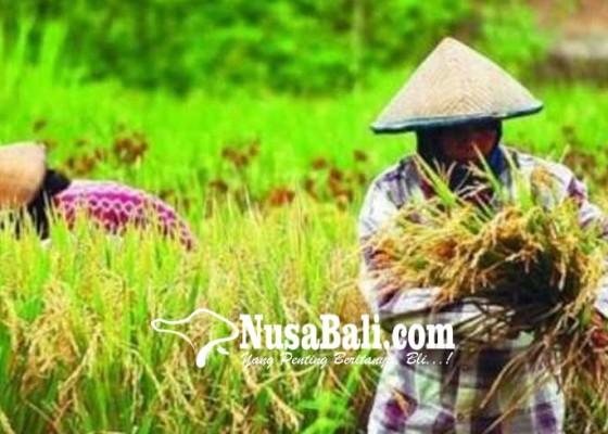 Nusabali.com - 60-persen-petani-di-denpasar-dapatkan-kartu-tani