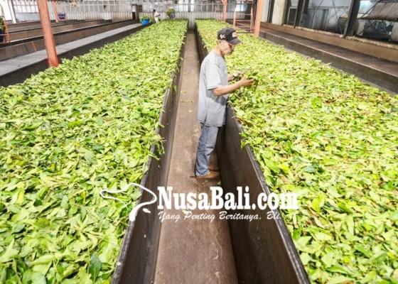 Nusabali.com - target-produksi-teh