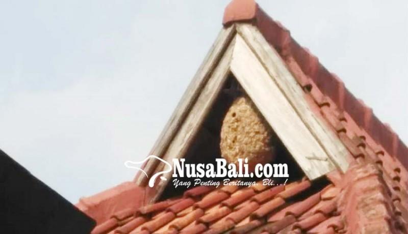 www.nusabali.com-sarang-tawon-sebesar-tabung-gas-dievakuasi