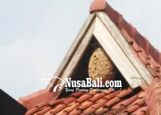 Nusabali.com - sarang-tawon-sebesar-tabung-gas-dievakuasi
