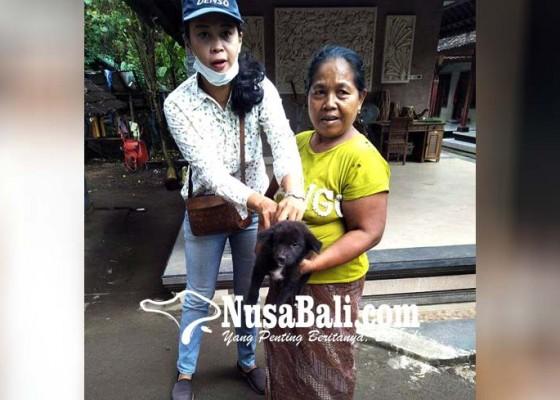 Nusabali.com - vaksinasi-rabies-kembali-digeber