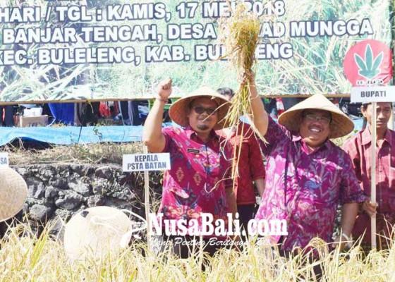 Nusabali.com - panen-perdana-padi-sidenuk-hasilkan-88-kuintal