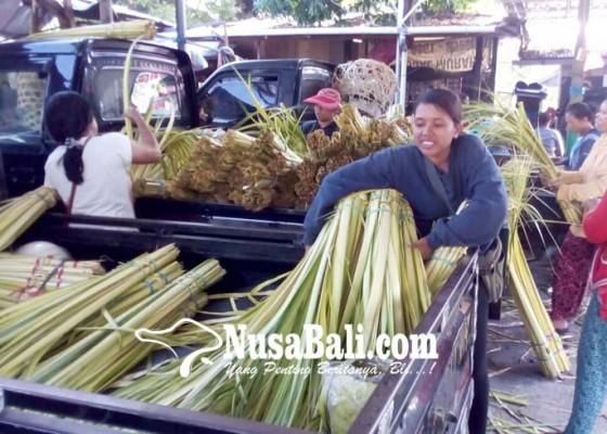 Nusabali.com - jelang-galungan-peralatan-upacara-merangkak-naik