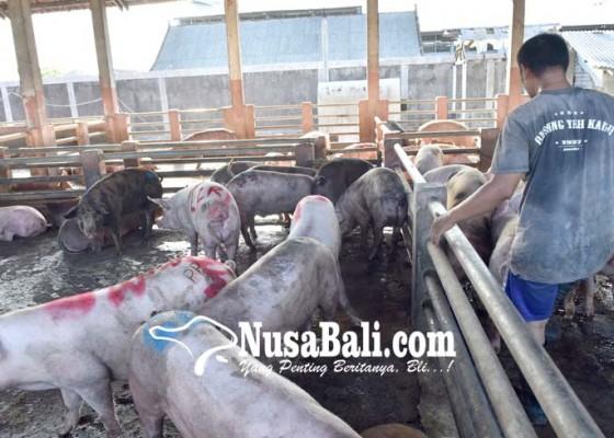 Nusabali.com - jelang-galungan-distan-siapkan-20-dokter-hewan-mandiri