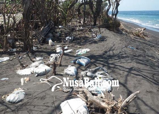 Nusabali.com - pantai-abrasi-kandang-ternak-hanyut