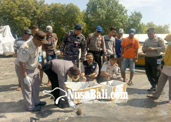 Nusabali.com - karantina-ikan-amankan-350-ekor-kepiting-bakau