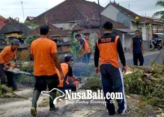 Nusabali.com - cegah-timpa-pengendara-pohon-tua-di-jalur-baturiti-dipangkas