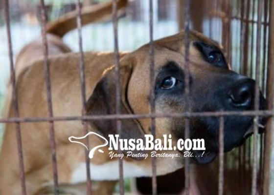 Nusabali.com - cegah-perdagangan-daging-anjing-pemkab-dorong-desa-adat-keluarkan-pararem