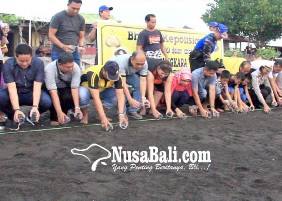 Nusabali.com - hut-bhayangkara-puluhan-tukik-dilepasliarkan
