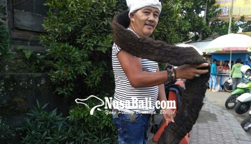 www.nusabali.com-punya-rambut-gimbal-2-meter-pernah-ditawar-rp-200-juta