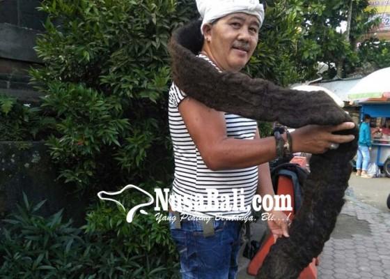 Nusabali.com - punya-rambut-gimbal-2-meter-pernah-ditawar-rp-200-juta