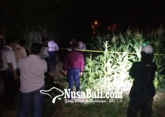 Nusabali.com - mayat-korban-ditemukan-di-tengah-kebun-jagung