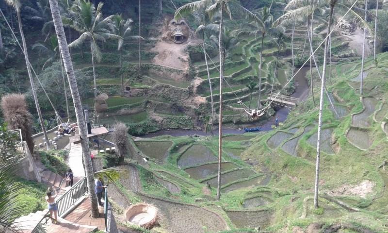 www.nusabali.com-tebing-padas-diukir-jadi-patung-gorila