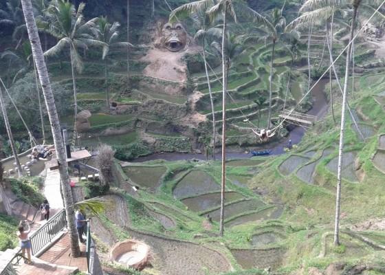 Nusabali.com - tebing-padas-diukir-jadi-patung-gorila
