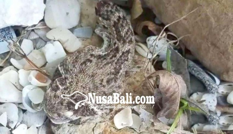 www.nusabali.com-kepala-dipenggal