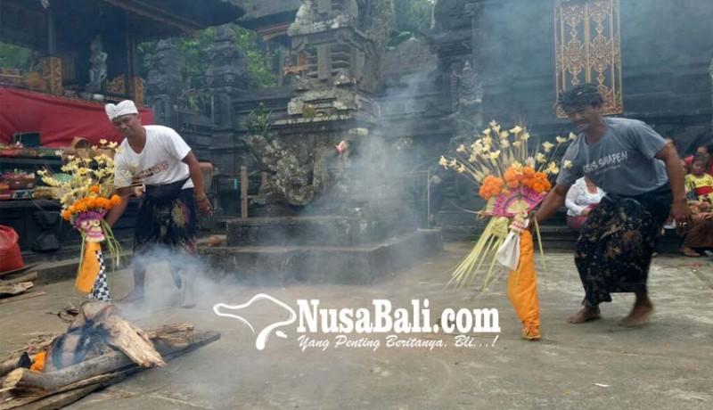 www.nusabali.com-bermakna-lindungi-tanaman-padi-dari-serangan-hama-penyakit