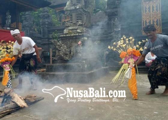 Nusabali.com - bermakna-lindungi-tanaman-padi-dari-serangan-hama-penyakit