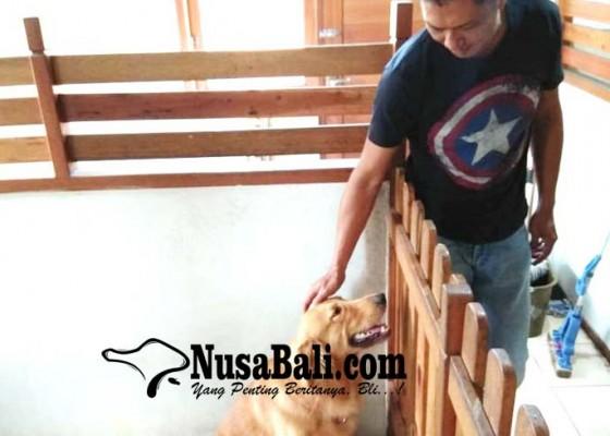 Nusabali.com - warga-mulai-titipkan-hewan-peliharaan